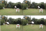 practising peripheral vision for defendingTraining at HomeBasketball Drills Coaching