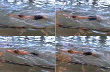 Backstroke - DrillsBackstroke - DrillsSwimming Drills Coaching